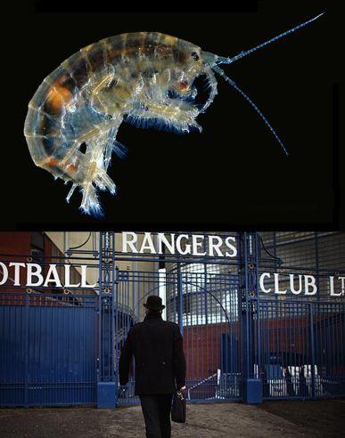 parasite rangers